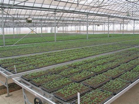 seed bed trinog xs xiamen greenhouse tech co ltd