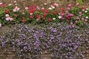Diseases Of Ornamental Plants - wall covering plants learn about plants suitable to hide a wall