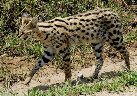 Mycybertwin Chats For You The Human Race Becomes Unneccessary by Serval
