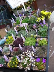 Rock Garden Nursery Assorted Rock Garden Plants Rock Gardens