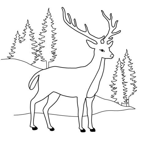 free coloring pages deer realistic deer coloring pages