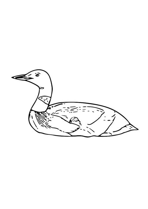 image gallery loon outline