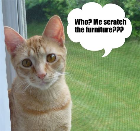 how to stop cat scratching sofa how to stop cats from scratching furniture