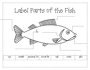 fish diagram coloring page label the parts of a fish by firstgradeannie teachers