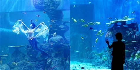 Jam Tangan Lasika Bisa Buat Berang jakarta aquarium wisata mewah melihat hewan laut yang