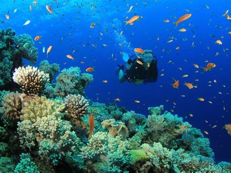 dive package scuba diving and snorkeling packages in cozumel