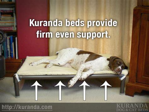 kuranda beds do kuranda beds provide orthopedic support frequently asked questions kuranda dog
