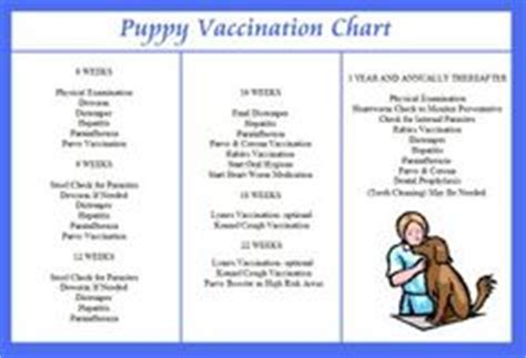 puppy daily schedule 1000 images about puppy time on new puppy checklist new puppy and