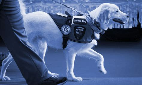 register as service animal service registration emotional support animal registration service
