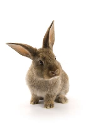 are rabbits color blind rabbit identification what do rabbits look like