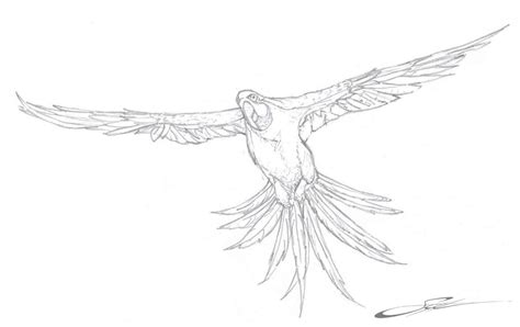 parrot coloring pages online free printable parrot coloring pages for kids