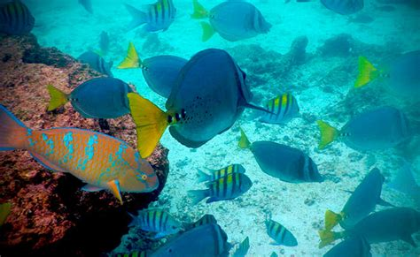 best places in the world for snorkeling ecuador snorkeling best place for snorkeling in the world