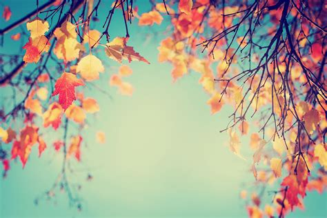 Get Ready For Autumn Fall Get Ready For Fall With These Tips Humble Davenport
