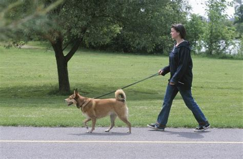 when do puppies walk does it matter which side the is on when walking care the daily puppy