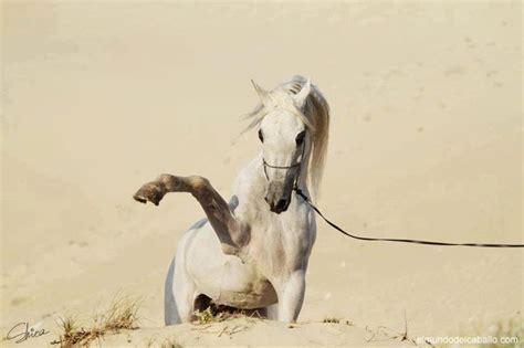 imagenes artisticas de caballos fotos de caballos viii http www elmundodelcaballo