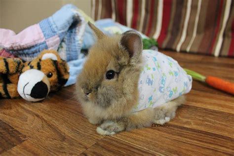 Bunny Pyjamas baby bunny in pajamas