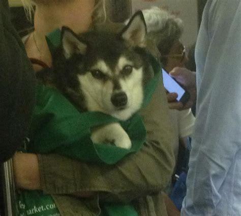 puppy nyc new york subway bag swapaw