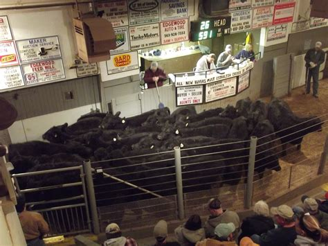 livestock auction edgewood livestock