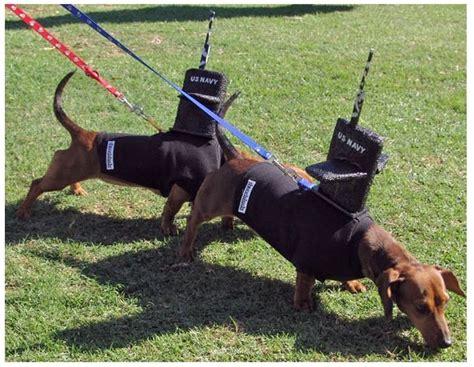 costume for dachshund best dachshund costume navy subs dachshunds dachshund