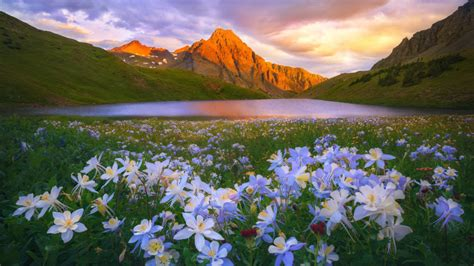 island lake colorado san juan mountains flowers meadow