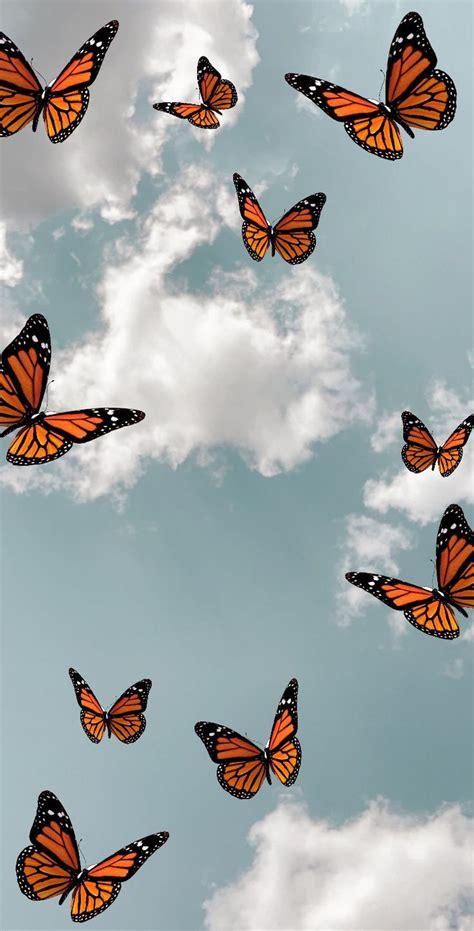 butterfly butterfly wallpaper iphone butterfly