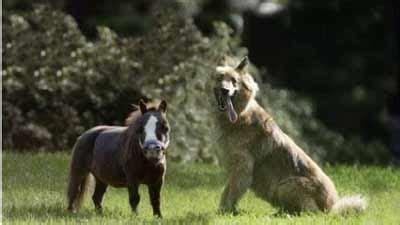 Sho Kuda Ukuran Kecil 10 hewan terkecil di dunia