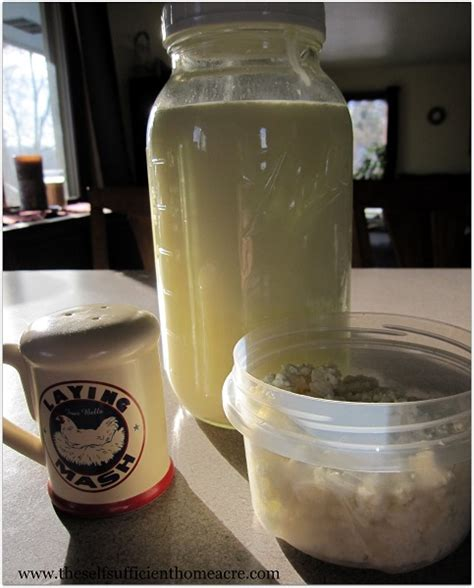 Cottage Cheese From Sour Milk by Cottage Cheese Made From Sour Milk The Self Sufficient