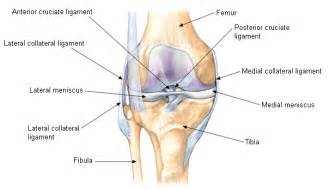 Interior Knee Ligament Physiotheriapy In Kenilworth Ailments Warwick Physio