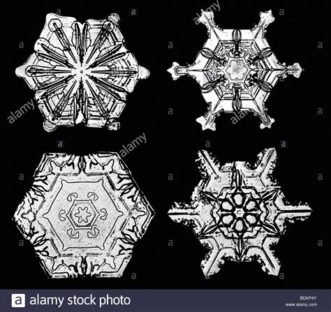 wilson bentley snowflakes photographed by wilson alwyn quot snowflake