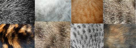 Types Of Cat Hair by Exclusively Cats Veterinary Hospital Is My Cat