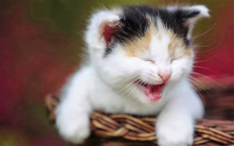 wallpaper kartun kucing lucu gambar dan meme lucu gambar kucing lucu galau