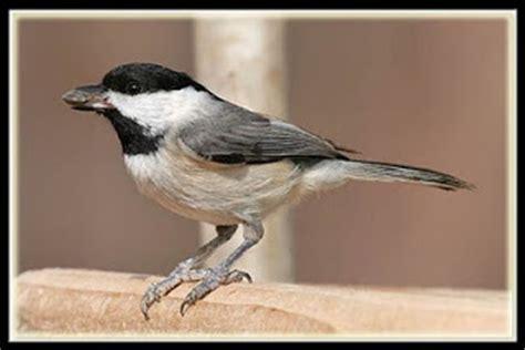 quot bird poop quot of north texas 2011 12 04