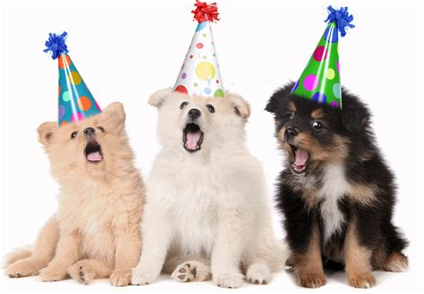 cing with dogs dogs singing happy birthday
