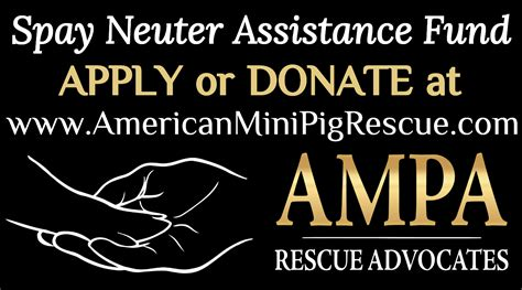 spay cost low cost spay neuter assistance program donate or apply