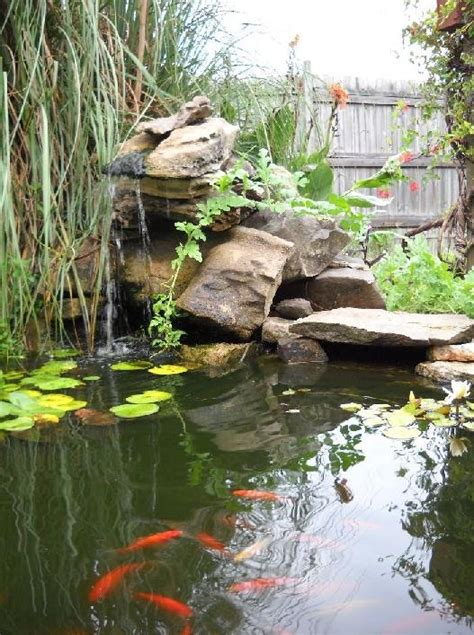 best 25 coy pond ideas on koi ponds koi pond