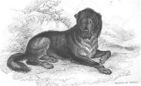war breeds dogs of war rome across europe