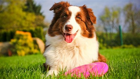 best frisbees top 5 best frisbee brands and flying discs for dogs 2018