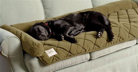 orvis dog couch best 25 dog couch cover ideas on pinterest