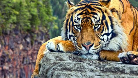wild animal wallpapers