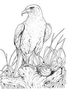 coloriage aigle royal coloriages 224 imprimer gratuits