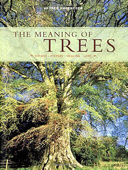 meaning of trees the meaning of trees the meaning of trees