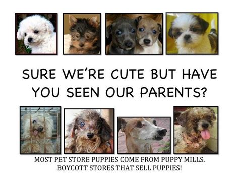 nyc pet stores that sell puppies pet shops in new york were investigated all sourced their puppies from puppy mills