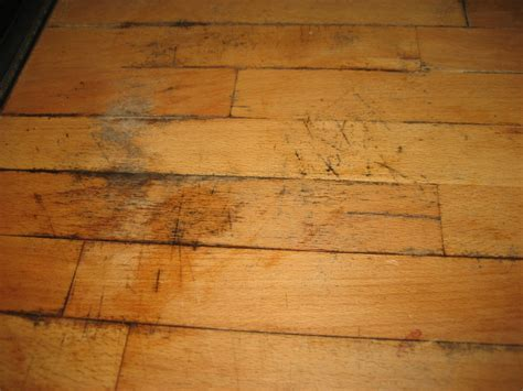 Mold Stains On Hardwood Floors   Gallery of Wood and Tile