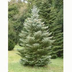 ornamental trees for wet areas myideasbedroom com