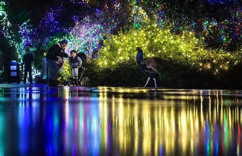 zoo light seattle seattle area lights where to see dazzling