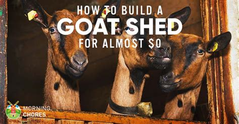 build  goat shed   loft bed