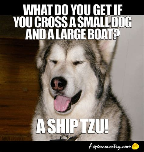 boat dog jokes easygoing dog meme riddle q what do you get if you cross