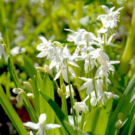 garten gestalten wildblumen 84 besten naturgarten wildblumen bilder auf