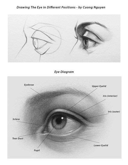 how to draw eye diagram cuong nguyen how to eye anatomy and