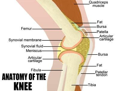 total knee replacement diagram knee replacement the san antonio orthopaedic